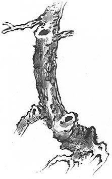 Taikiken intuïtief boksen tree drawing
